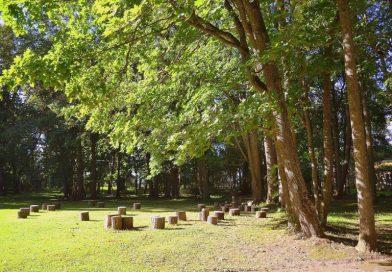 Vaboles parkā tiks stādīti koki Latvijas simtgadei